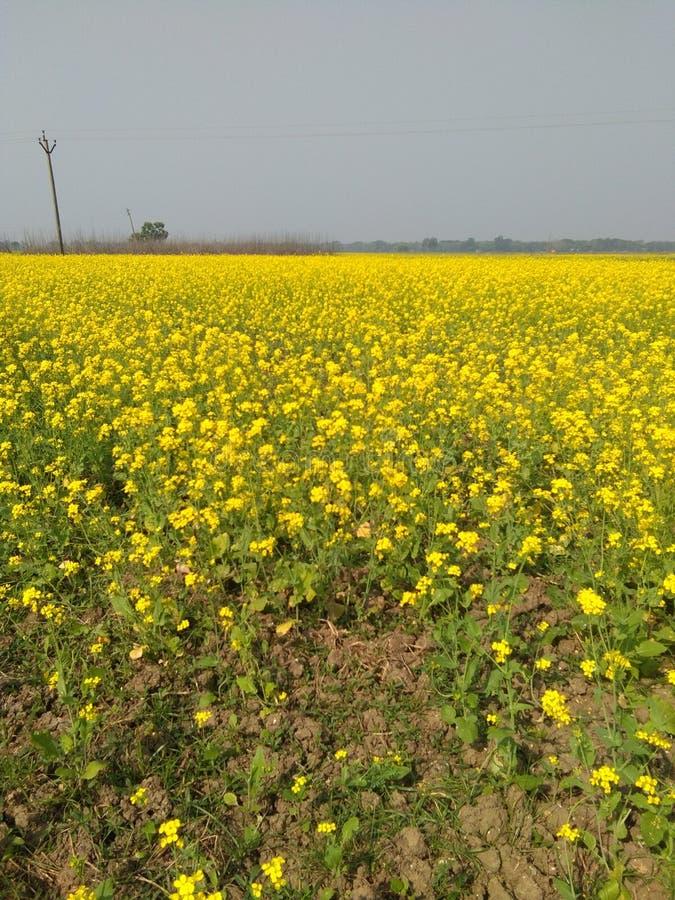 Bei fiori della natura fotografia stock libera da diritti