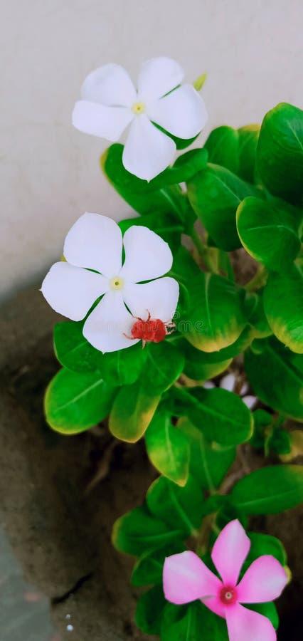 Bei fiori della pianta del fiore Disponga i diversi fori per loro immagine stock