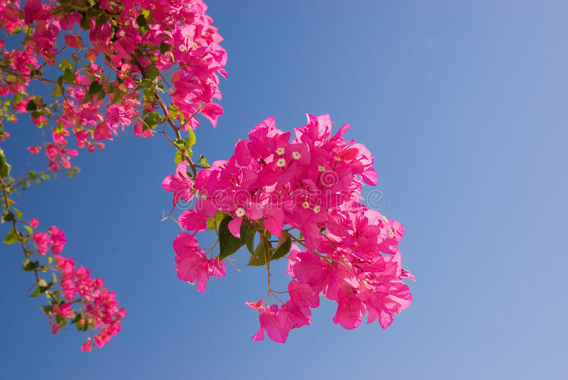 Download Bei fiori dentellare fotografia stock. Immagine di giardino - 3133020