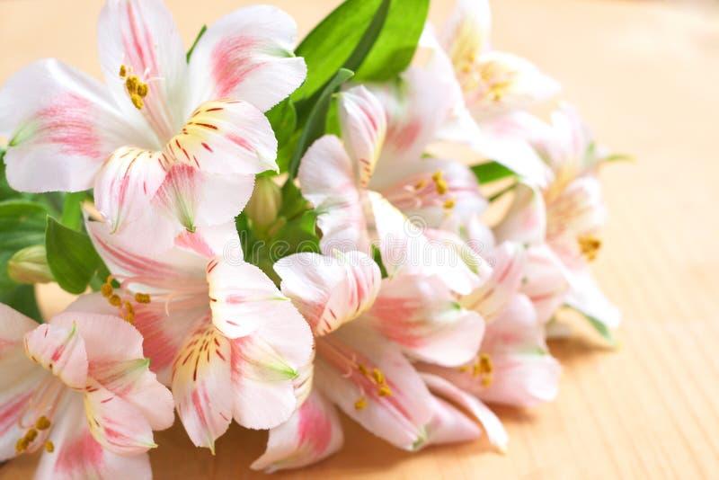 Bei fiori dentellare con lo spazio della copia immagine stock libera da diritti