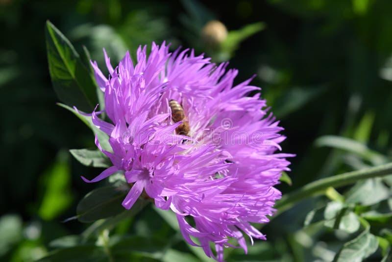 Download Bei Fiori Dentellare Nel Giardino Immagine Stock - Immagine di fiore, estratto: 117979417