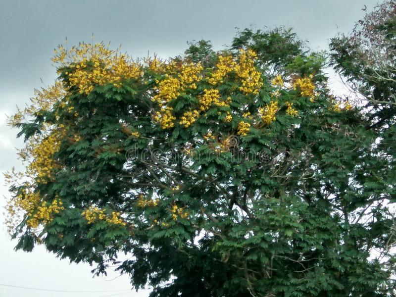 Bei fiori di colore nel giardino fotografia stock