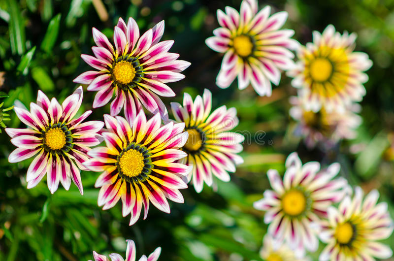Bei fiori di estate immagine stock