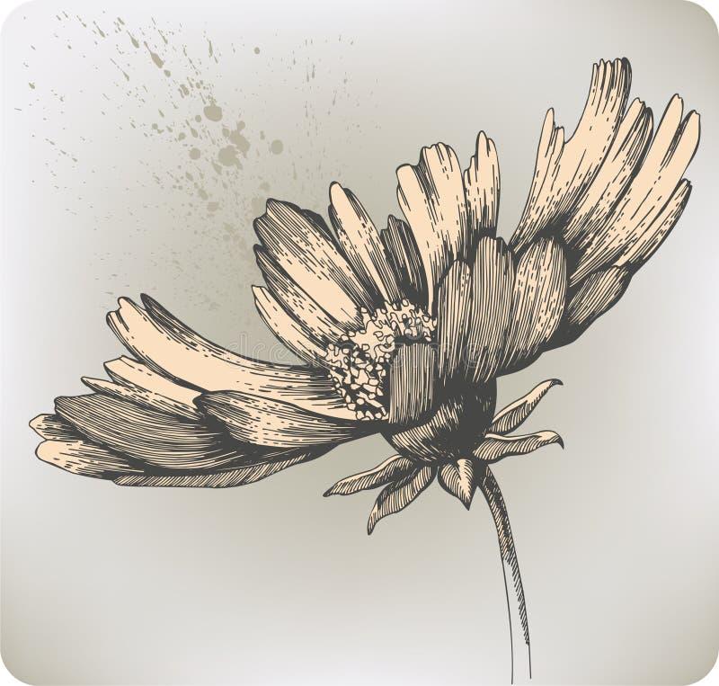 Bei fiori di fioritura, mano-illustrazione. Vettore i illustrazione vettoriale
