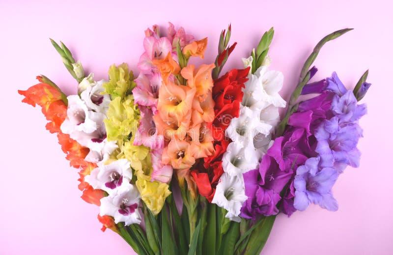 Bei fiori di gladiolo su fondo rosa d'avanguardia immagini stock