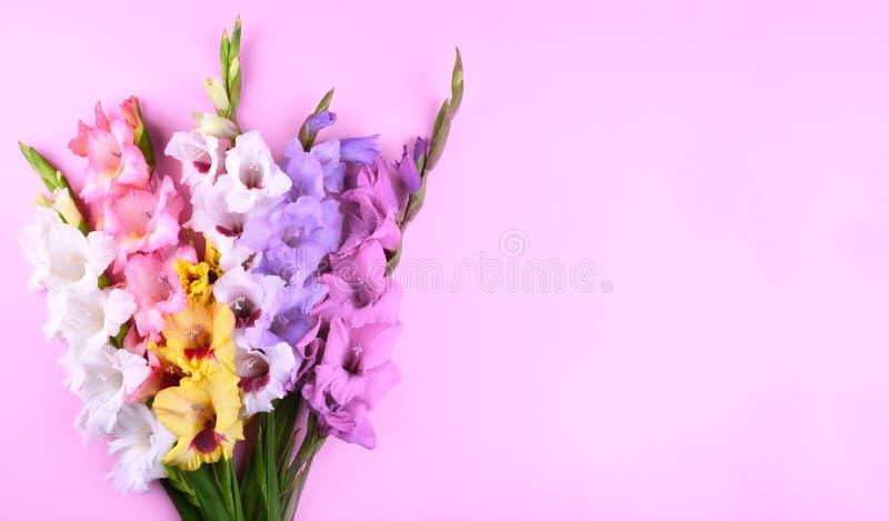 Bei fiori di gladiolo su fondo rosa d'avanguardia immagine stock libera da diritti