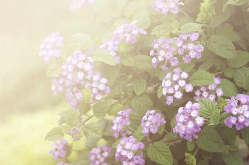 Bei fiori fatti con i filtri variopinti fotografie stock