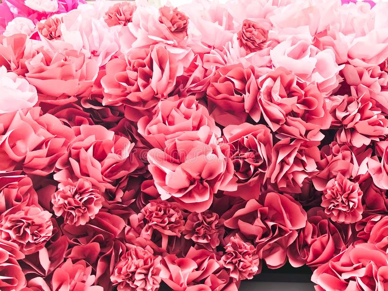 Bei fiori fertili naturali di rossi carmini dei petali rosa delle peonie I cenni storici Struttura fotografie stock