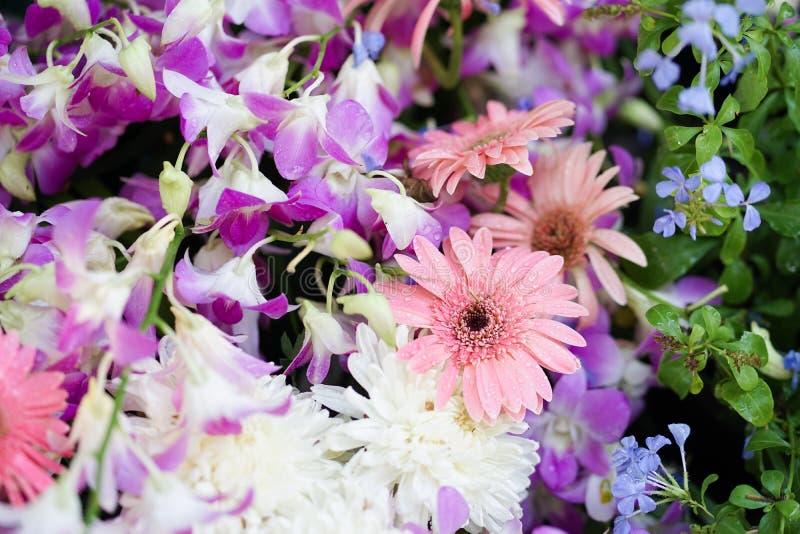 Bei fiori Fiori freschi e bei con le gocce di acqua ed il fuoco selettivo sul fiore rosa della gerbera, circondato vicino immagine stock