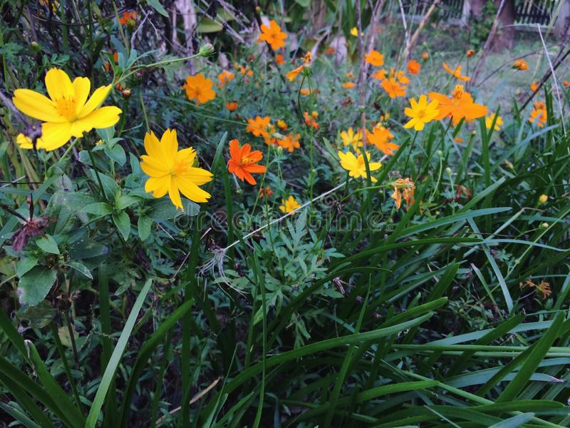 Bei fiori gialli minuscoli che fioriscono nella foresta fotografia stock