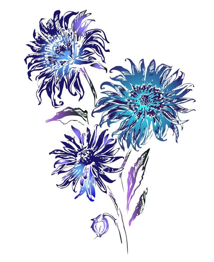 Bei fiori isolati su priorità bassa bianca Tinte del blu illustrazione vettoriale