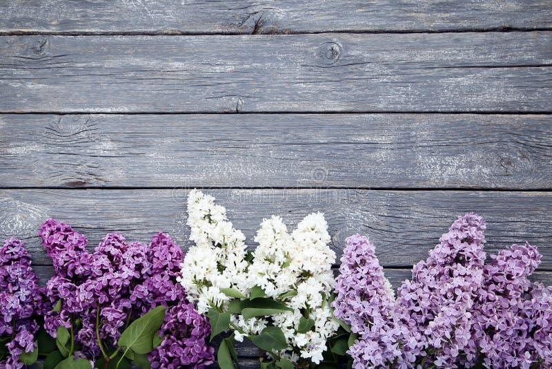 Bei fiori lilla fotografia stock