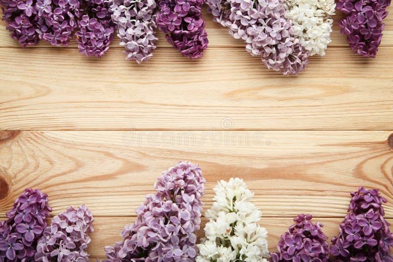 Bei fiori lilla fotografia stock libera da diritti