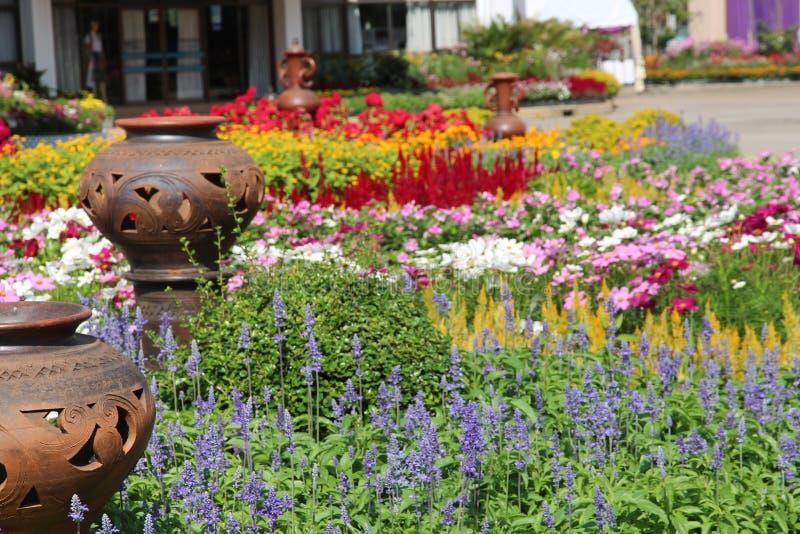 Bei fiori naturali fotografia stock libera da diritti