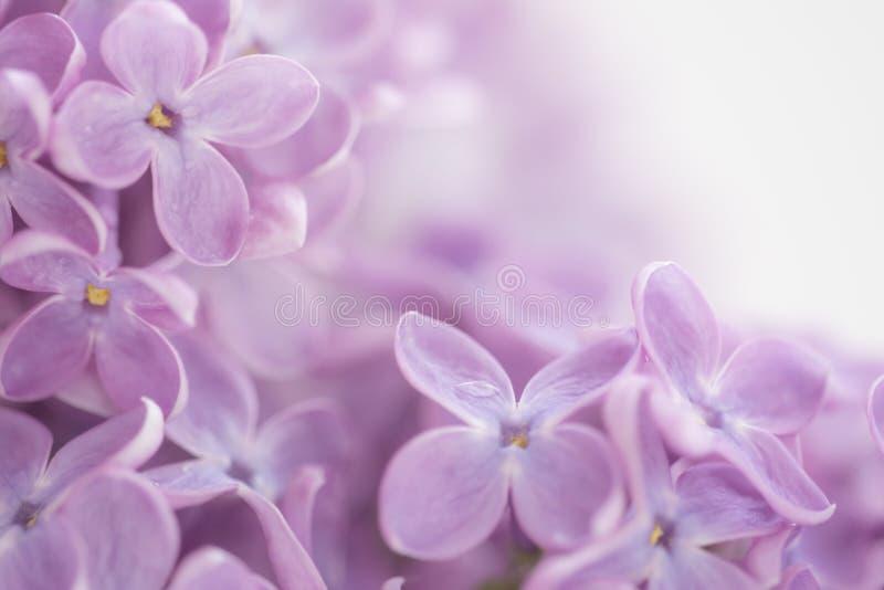 Bei fiori nel giardino al mezzo della molla fotografia stock