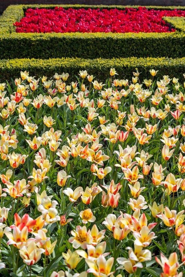 Bei fiori olandesi immagini stock