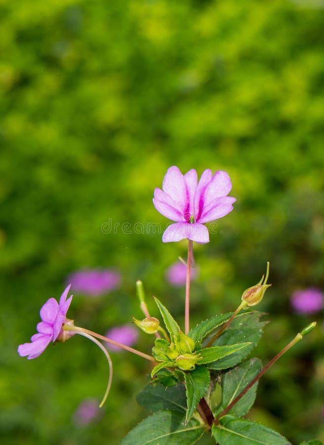 Bei fiori rosa con fondo verde confuso fotografia stock