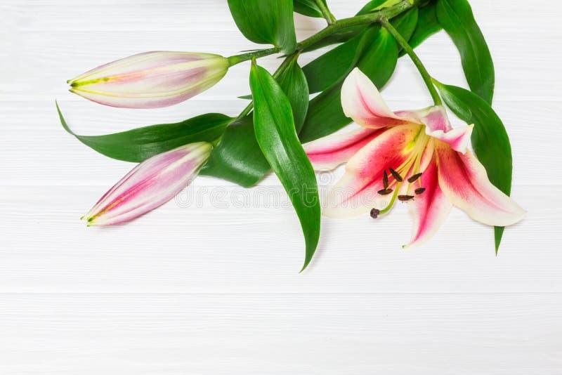 Bei fiori rosa del giglio su fondo di legno, con spazio per testo Immagine perfetta per: giglio bianco e rosa dei fiori dei gigli fotografie stock libere da diritti