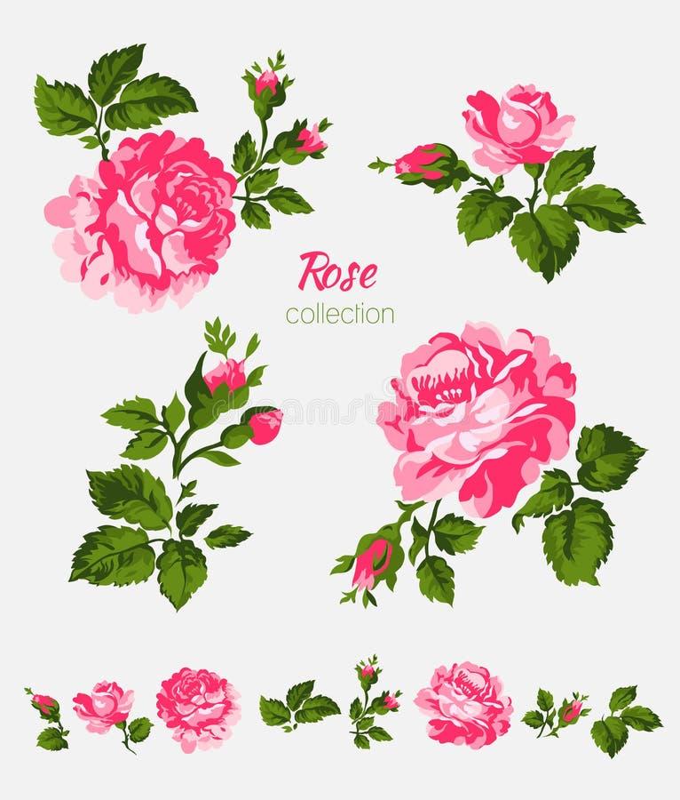 Bei fiori rosa isolati sui precedenti bianchi Insieme degli elementi differenti di progettazione floreale illustrazione vettoriale