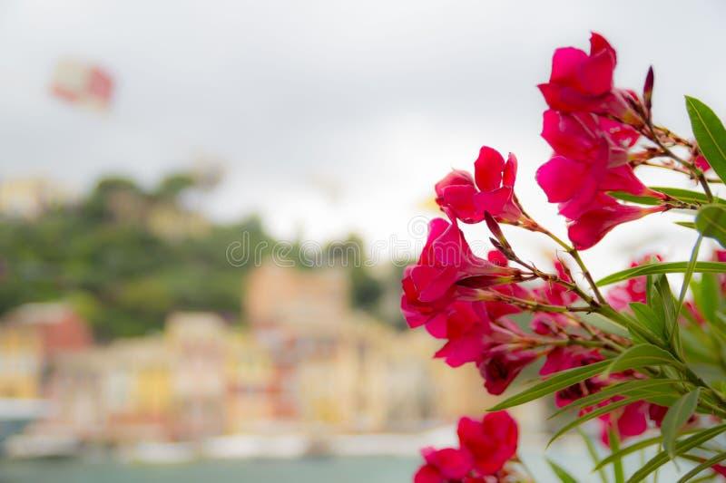 Bei fiori rossi all'aperto fotografie stock