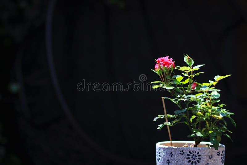 Bei fiori rossi nella città acient fotografie stock libere da diritti
