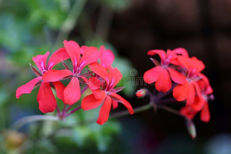 Bei fiori rossi tropicali con fondo molle fotografato in Madera immagini stock