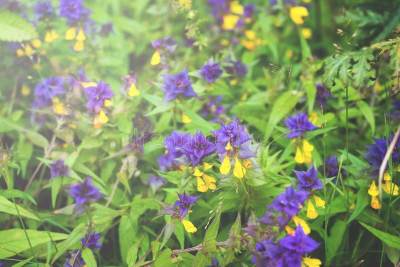 Bei fiori selvaggi al sole E fotografia stock libera da diritti