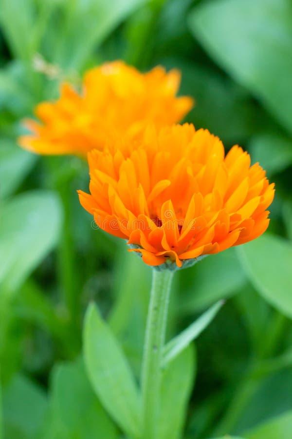 Bei fiori in un giardino immagine stock