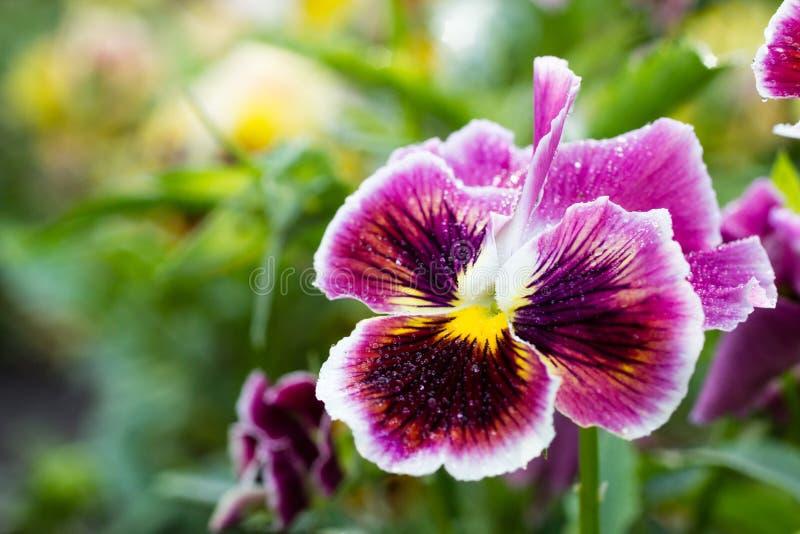 Bei fiori in un giardino immagini stock libere da diritti