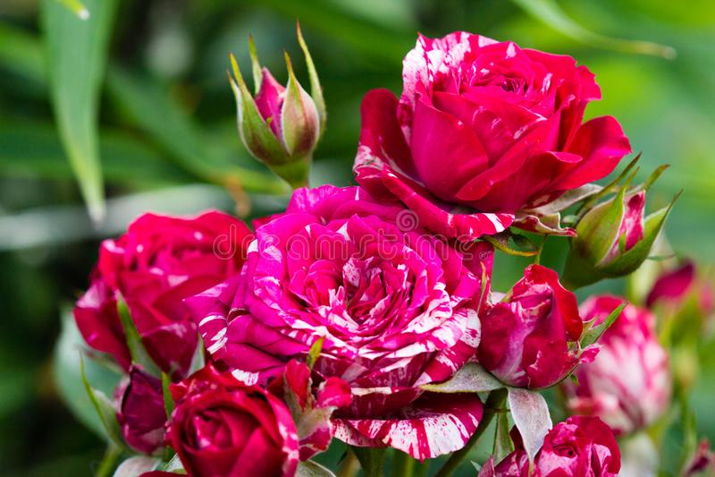Bei fiori in un giardino fotografia stock libera da diritti