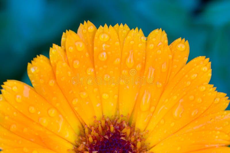 Bei fiori in un giardino fotografie stock libere da diritti