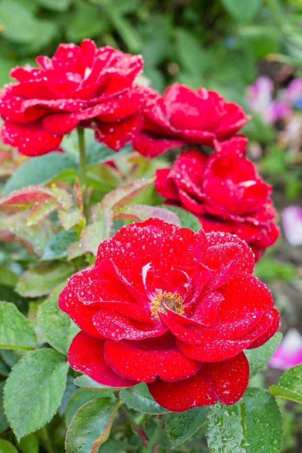 Bei fiori in un giardino fotografia stock