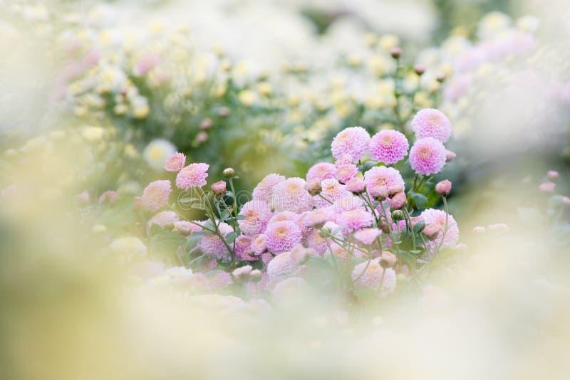 Bei fiori viola come priorità bassa di sogno immagini stock