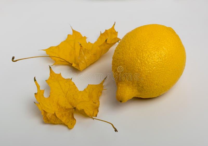 Bei foglia di acero e limone asciutti su fondo di legno bianco immagine stock libera da diritti