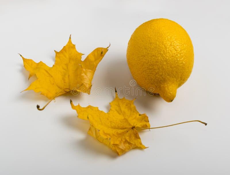Bei foglia di acero e limone asciutti su fondo di legno bianco fotografia stock