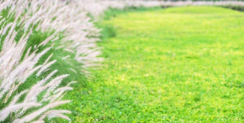 Bei fondo ed insegna di estate della natura del fiore dell'erba verde Modello dello sfondo naturale per estate o la stagione prim fotografia stock libera da diritti