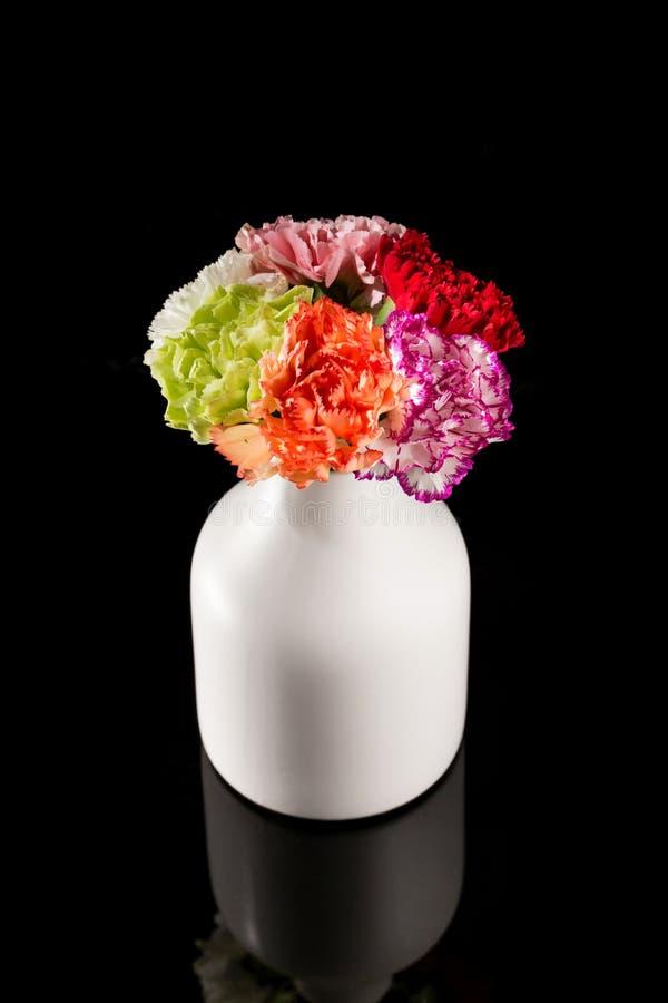 Bei garofani in fioritura fotografie stock libere da diritti
