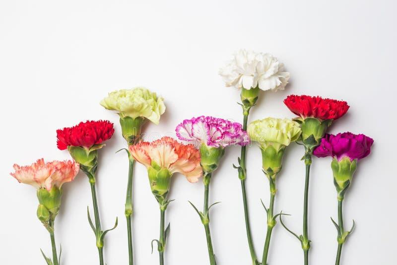 Bei garofani in fioritura fotografia stock