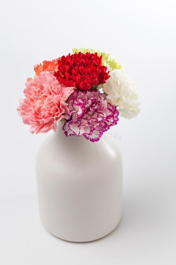 Bei garofani in fioritura immagini stock