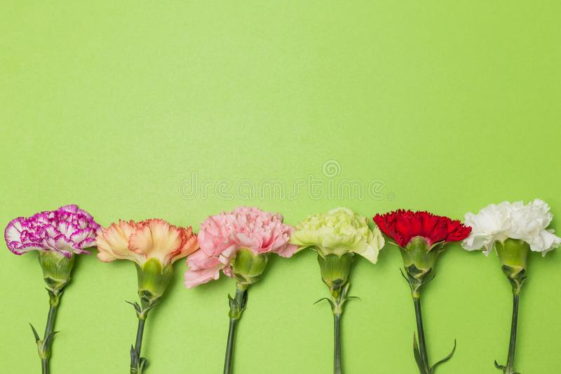 Bei garofani in fioritura immagini stock libere da diritti