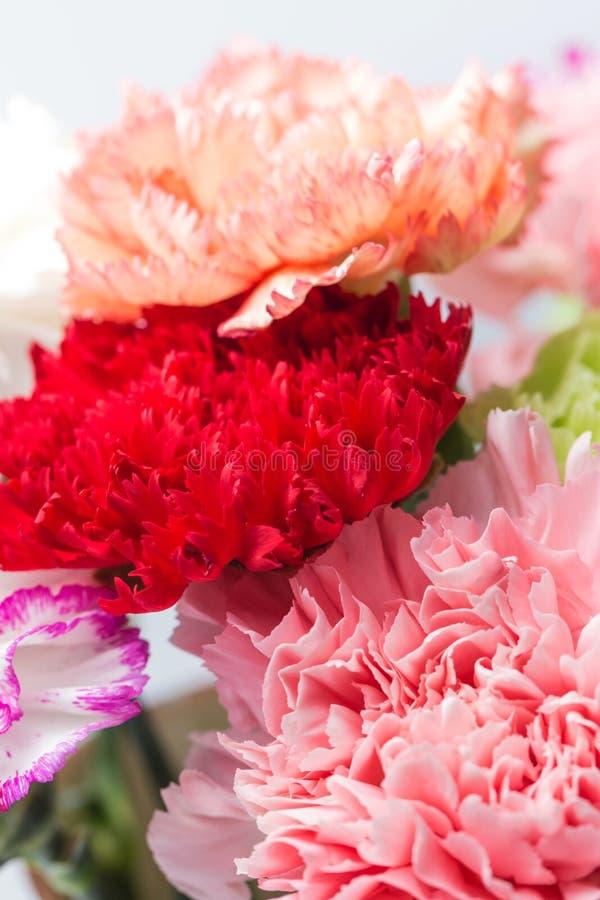 Bei garofani in fioritura immagine stock