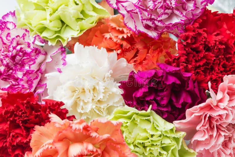 Bei garofani in fioritura fotografie stock
