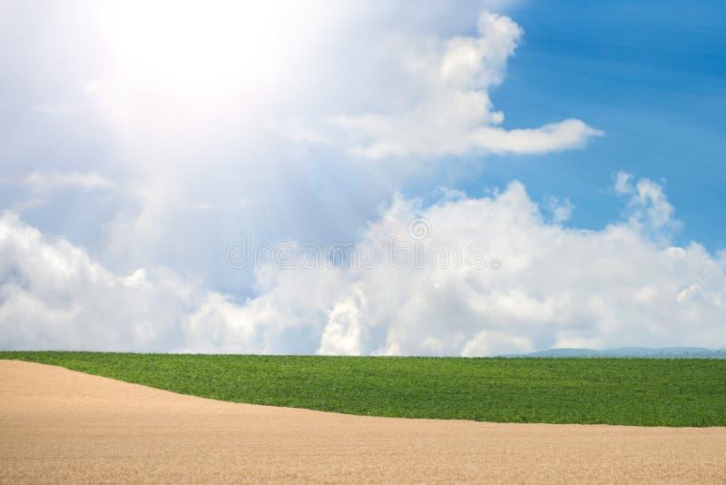 Bei grano e campo di grano fotografie stock libere da diritti