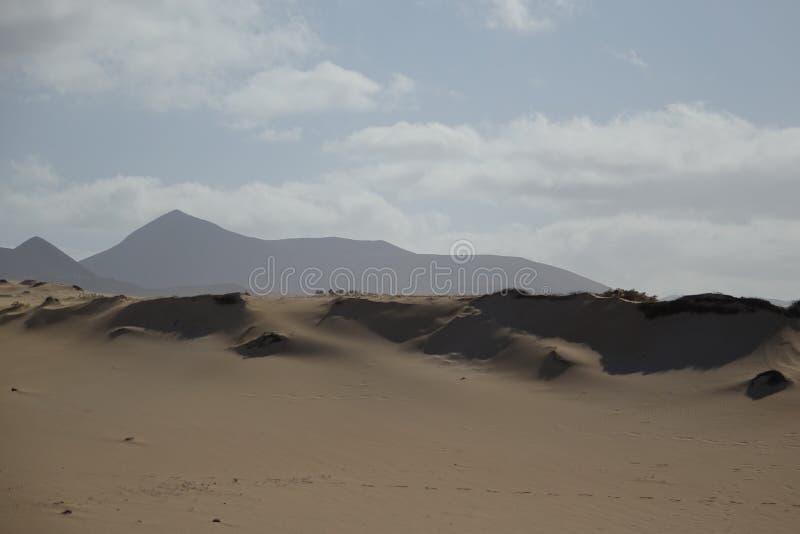Bei modelli nella sabbia nel parco naturale in Corralejo Fuerteventura Spagna fotografia stock libera da diritti