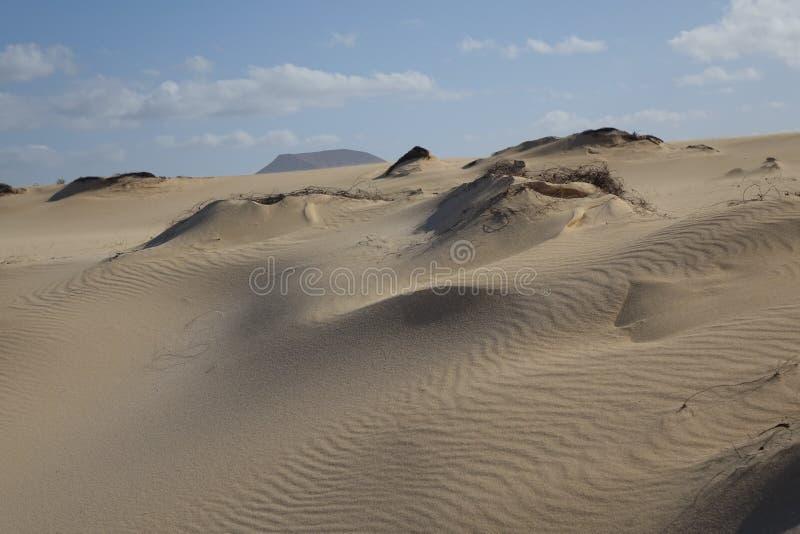 Bei modelli nella sabbia nel parco naturale in Corralejo Fuerteventura Spagna fotografie stock libere da diritti