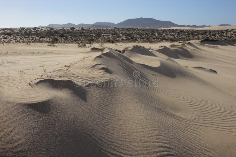 Bei modelli nella sabbia nel parco naturale in Corralejo Fuerteventura Spagna immagine stock libera da diritti