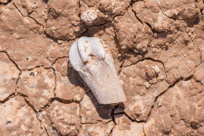 Bei modelli ora creati nel fango/roccia secchi con un visibile del fossile dovuto erosione - parco nazionale dei calanchi immagini stock libere da diritti