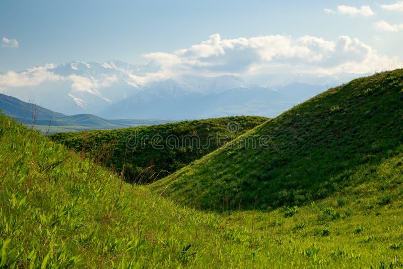 Bei molla e paesaggio di estate Colline verdi fertili, alte montagne Erbe di fioritura della primavera Tulipani selvatici della m immagine stock libera da diritti
