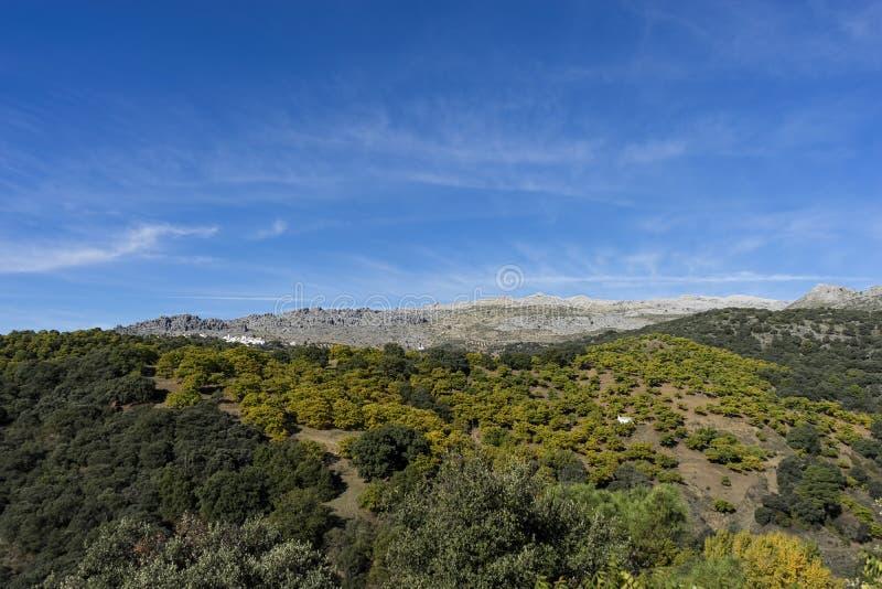 Bei paesaggi naturali della spagna nella provincia di for Foto paesaggi naturali gratis