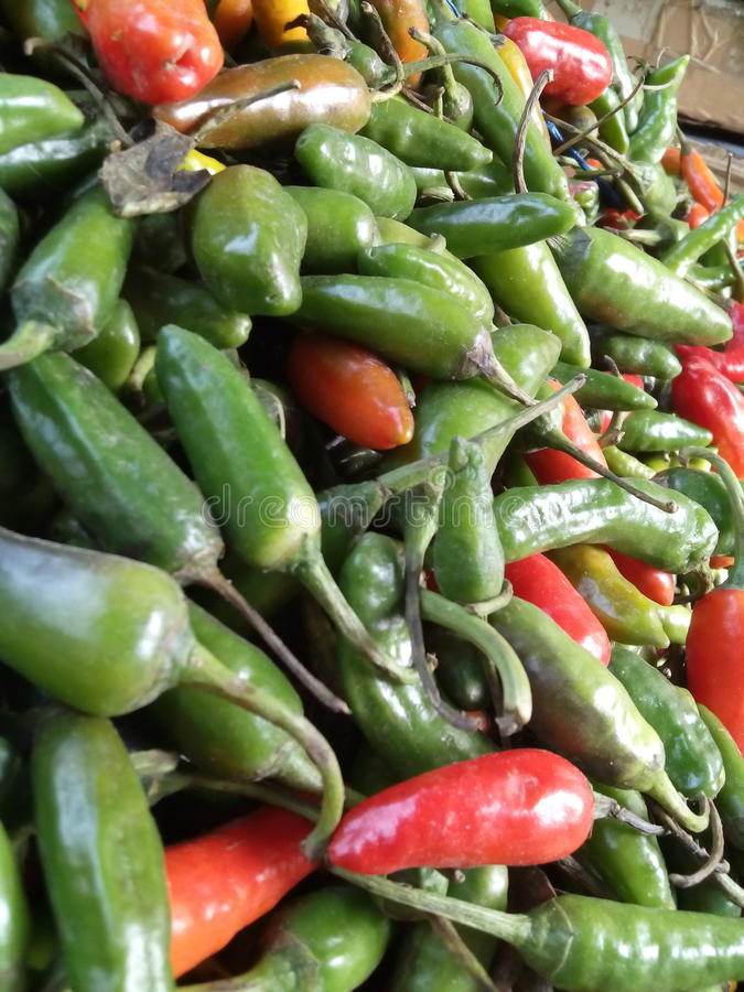 Bei peperoncini rossi fotografie stock libere da diritti